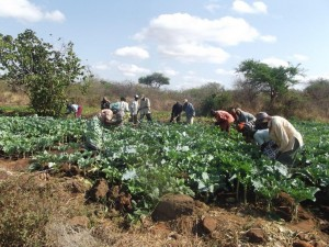 The Water Project : kakai-shg-vegetable-garden-9