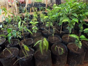 The Water Project : kakai-shg_-tree-nursery_september-2012-1