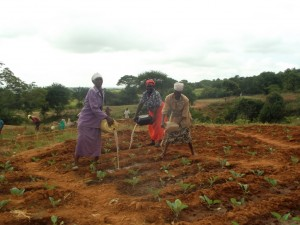 The Water Project : kenya4040-32-farming