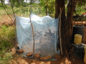 The Water Project : kenya4299-02-first-members-chicken-day-shelter-and-the-chickens