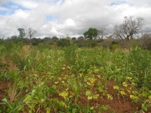 The Water Project : kenya4299-05-first-members-farm