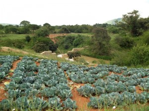 The Water Project : kenya4300-13-farm