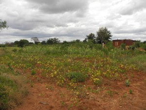The Water Project : kenya4301-03-first-members-farm