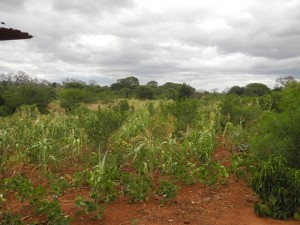 The Water Project : kenya4301-04-first-members-farm