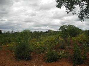 The Water Project : kenya4301-05-first-members-farm