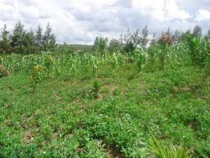 The Water Project : uganda6055-17-school-garden