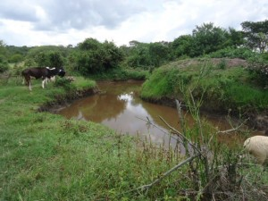 The Water Project : uganda6056-01-previous-water-source