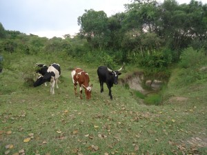 The Water Project : uganda6057-02-pastoral-community