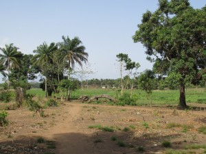 The Water Project : sierraleone5070-07-previous-water-source