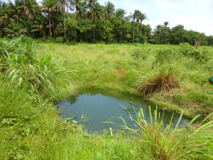 The Water Project : sierra-leone5066-03-alt-water-source