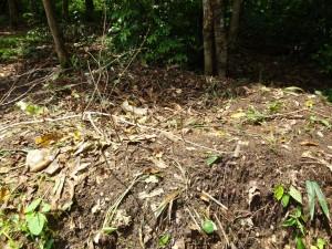 The Water Project : sierra-leone5066-20-rubbish
