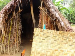 The Water Project : sierra-leone5074-26-palm-screen