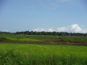 The Water Project : sierraleone5065-30-farm-land