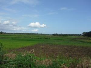 The Water Project : sierraleone5065-32-farm-land