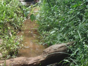 The Water Project : uganda6064-04-current-water-source
