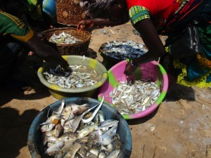 The Water Project : 3-sierraleone5088-selling-fish