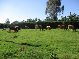 The Water Project : 4-kenya4616-school-livestock