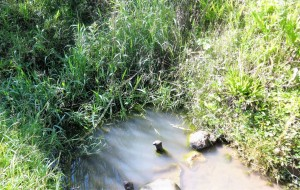 The Water Project : 1-kenya4584-unprotected-spring