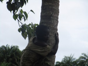 The Water Project : 16-sierraleone5093-coconut-tree
