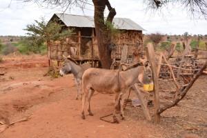 The Water Project : 3-kenya4498-donkeys