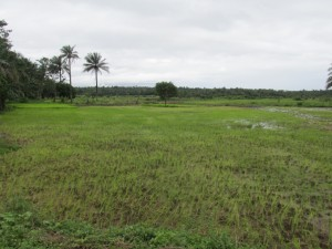 The Water Project : 5-sierraleone5092-rice-field