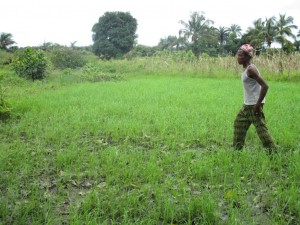 The Water Project : 6-sierraleone5093-swamp-rice