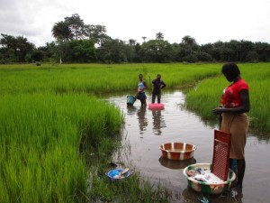 The Water Project : 1-sierraleone5095-swamp