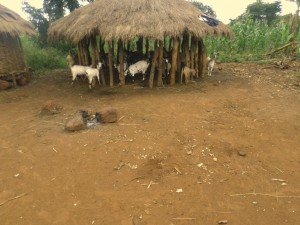 The Water Project : 13-uganda6073-animals