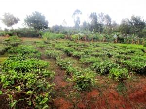 The Water Project : 10-kenya4643-school-farm