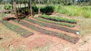 The Water Project : 15-kenya4644-tree-nursery