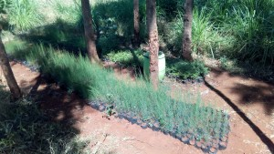 The Water Project : 16-kenya4644-plants
