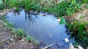 The Water Project : 4-kenya4697-unprotected-source