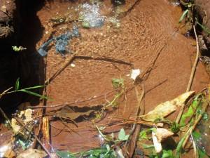 The Water Project : 4-kenya4703-wamwaka-spring