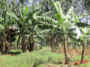 The Water Project : 7-kenya4633-school-surroundings