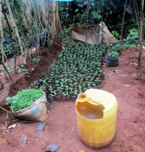 The Water Project : 7-kenya4702-water-for-small-farm