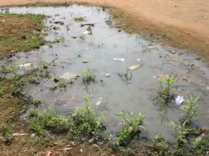 The Water Project : 5-sierraleone5103-stagnant-water