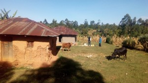 The Water Project : 9-kenya4704-local-household