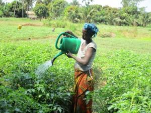 The Water Project : 9-sierraleone5102-gardening