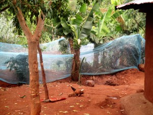 The Water Project : 19-kenya4706-garden-with-mosquito-net-fence