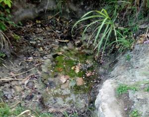 The Water Project : 1-kenya4726-indiatsi-omukitsa-spring