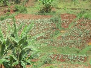 The Water Project : 12-kenya4715-community-landscape