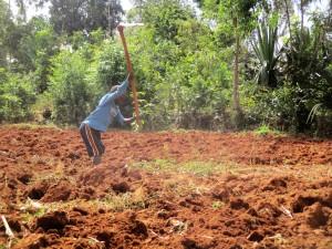 The Water Project : 13-kenya4715-farm