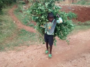 The Water Project : 8-kenya4715-boy-helps-his-mother-to-feed-animals-after-school